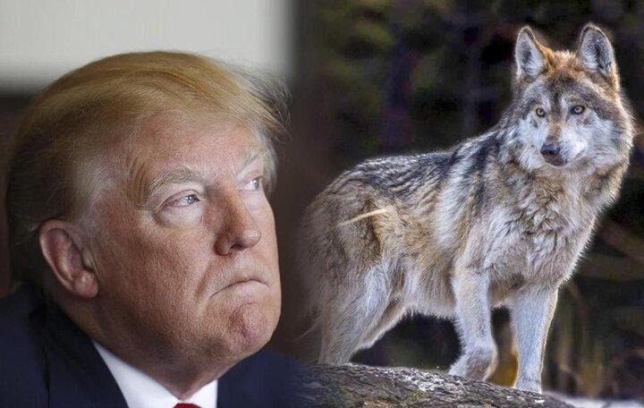Elecciones en Estados Unidos: Atento al Lobo