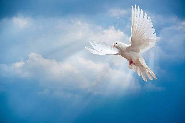 Filosofía de la paz del Imam Hassan Al-Muytaba