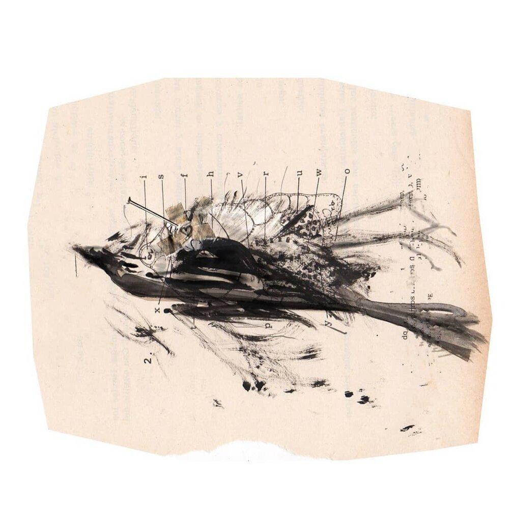 GALERÍA TIERRA VIVA. Autora: Andrea Britto. Título: Para una nueva zoología. Técnica: Pincel seco sobre papel. 2020