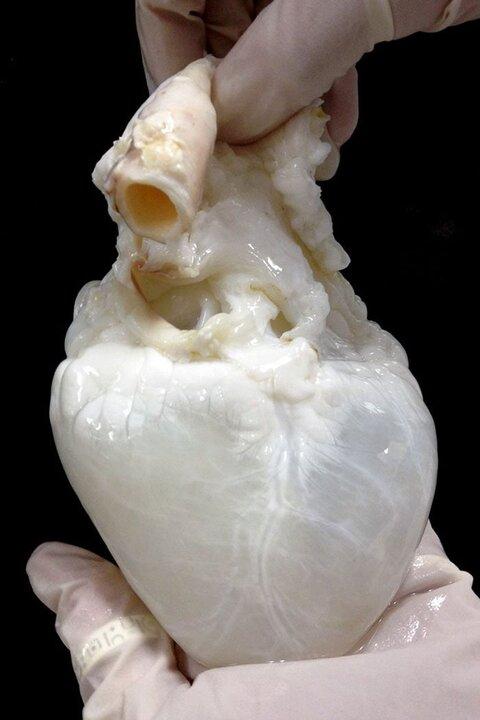 Corazón Fantasma
