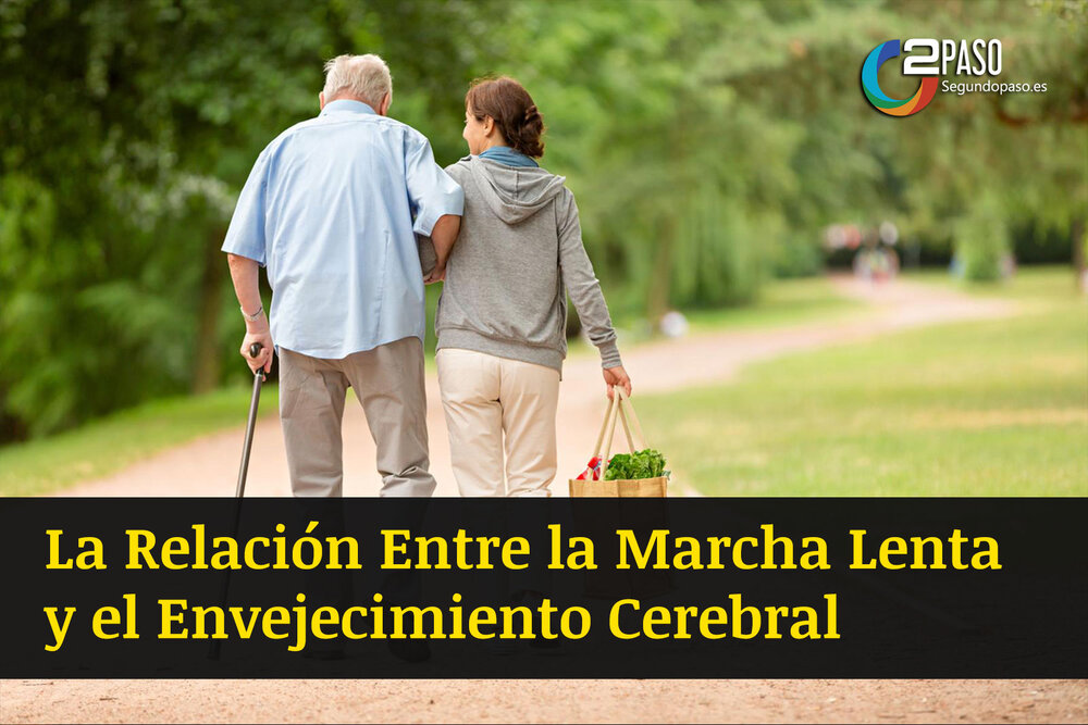 La Relación Entre La Marcha Lenta y El Envejecimiento Cerebral