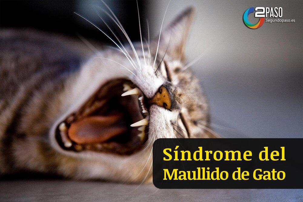 Síndrome del Maullido De Gato